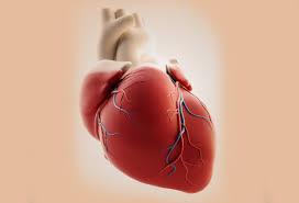 Comment remédier aux maladies cardio-vasculaires?