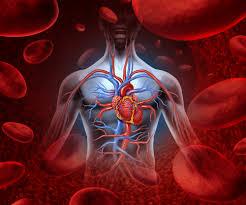 Un nouveau traitement contre l'insuffisance cardiaque en 2016