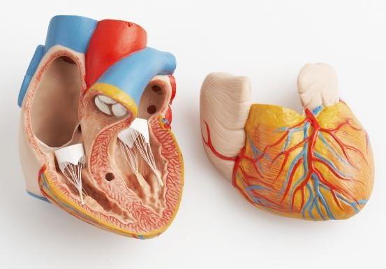 Quels sont les médicaments qui existent pour traiter l'insuffisance cardiaque ?