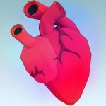 Maladies cardio-vasculaires: plus on avance dans l'âge, plus la prévention est importante